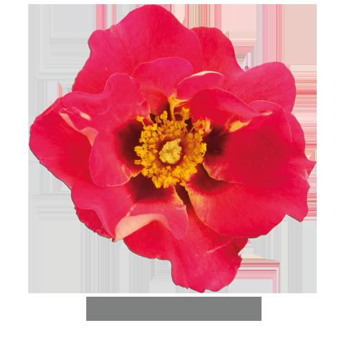 eye-to-eye