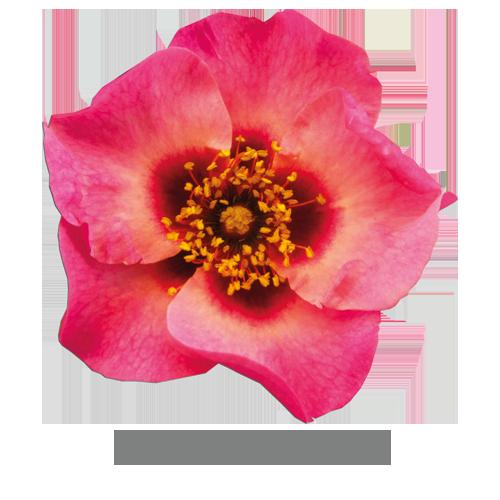 eyes-on-me